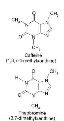 çikolatada kafein var mı kafein vs teobromin